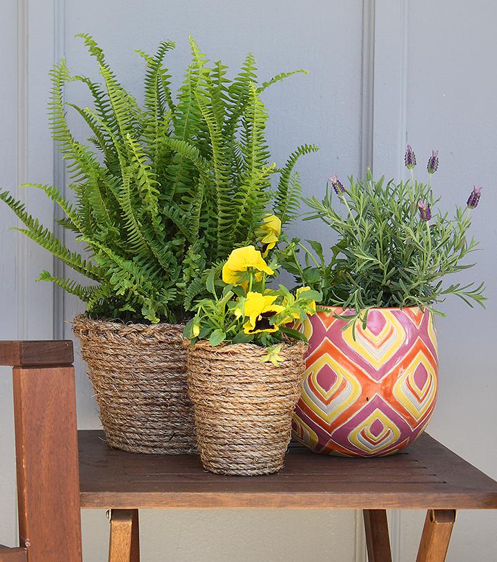 office flower pots. \ Office Flower Pots U